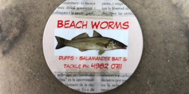 Preserving Live Beach Worms – Duff's Salamander Bay Bait